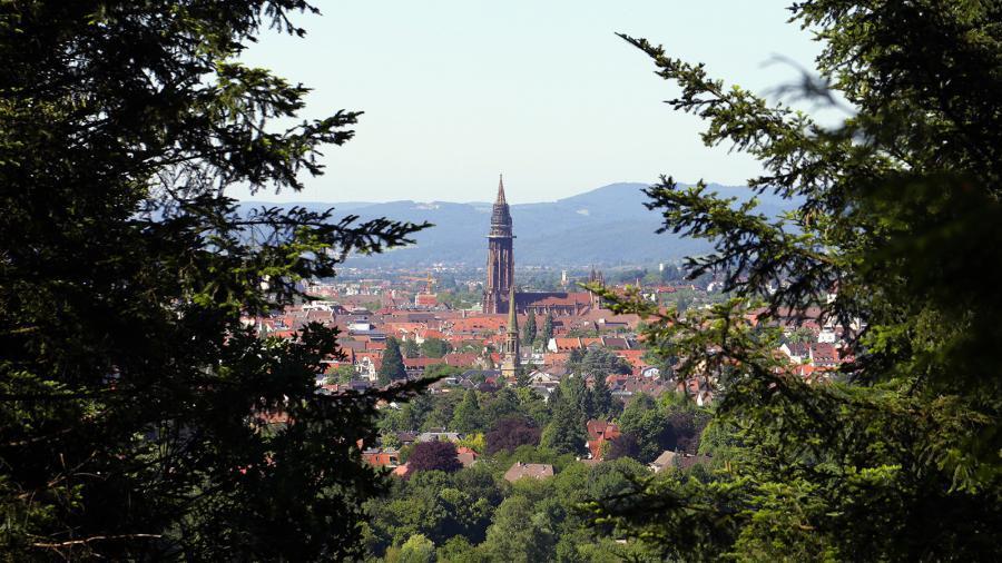 Im Wald: Blick auf den Freiburger Münster