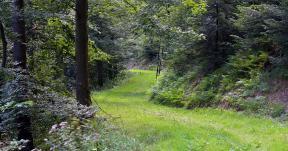 Pilzwanderungen bei Freiburg und im Schwarzwald