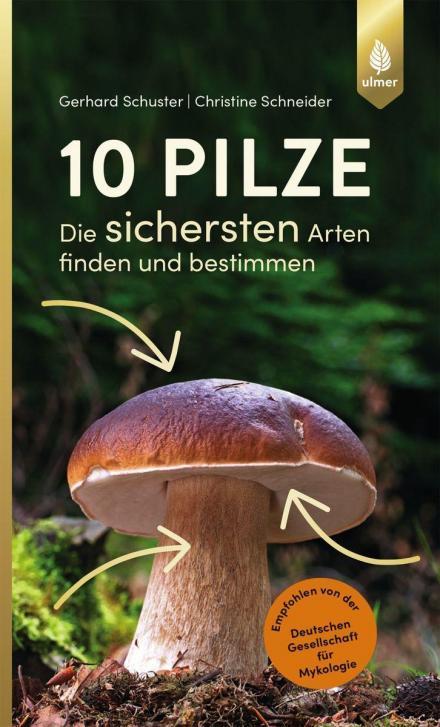 Pilzbuch: 10 Pilze